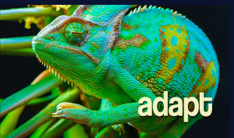 adapt-image-5